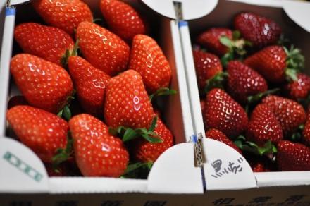 いちご イチゴ 苺